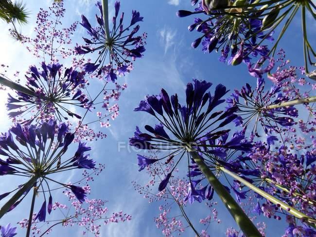Вид снизу цветущих цветов — стоковое фото