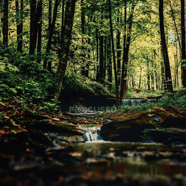 Cascata naturale montagna bella — Foto stock
