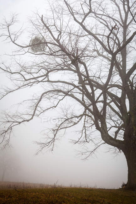 Tree view in foggy weather — Stock Photo