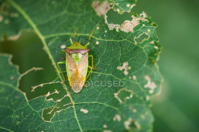 Закри вигляд жука на лист — стокове фото