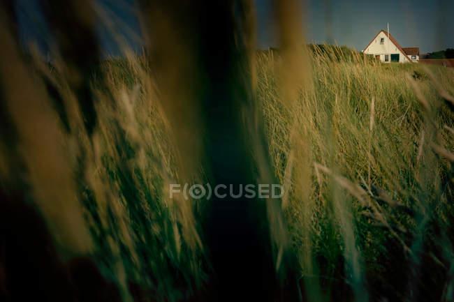 Closeup vista de ervas que crescem ao ar livre, casa construção no fundo — Fotografia de Stock