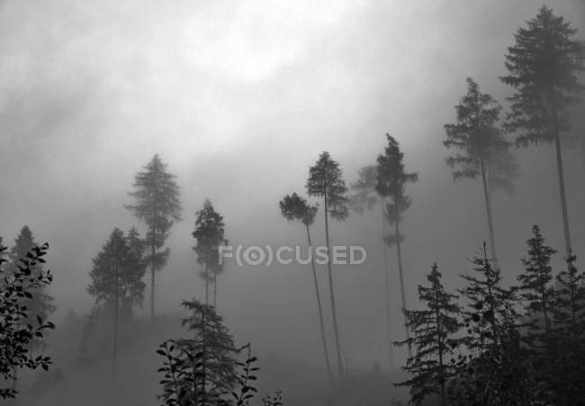 Landscape with foggy forest view — Stock Photo