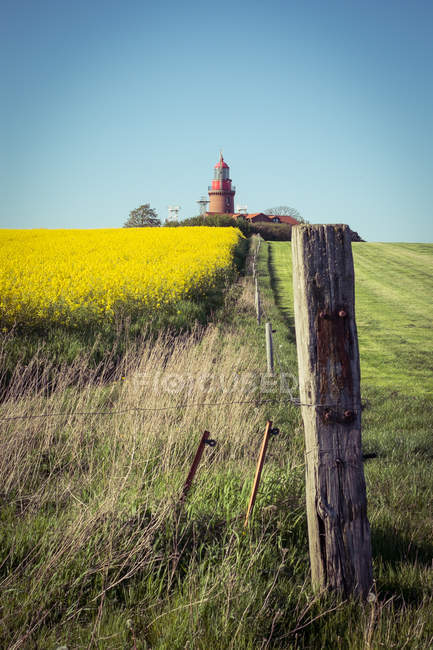 Landschaft mit gelben Raps Feld — Stockfoto