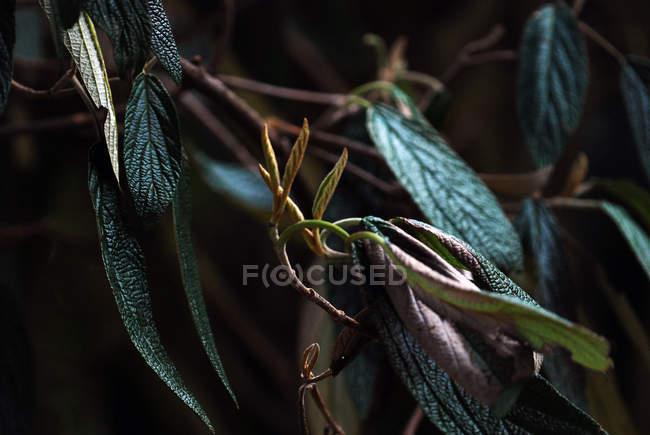 Tiro macro da planta de folhas — Fotografia de Stock