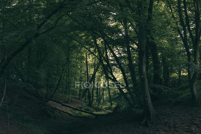Лес, Заросший листвы — стоковое фото
