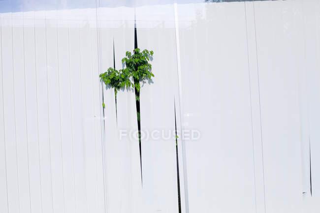 Fensterscheibe mit Grünpflanze lässt zwischen Fensterläden — Stockfoto