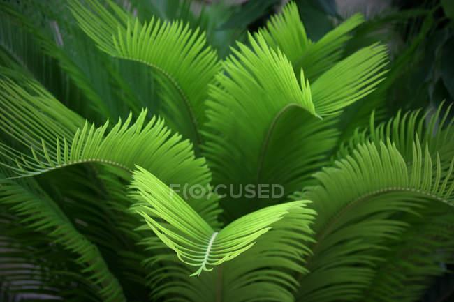Frische grüne exotischen tropischen Baum Blätter — Stockfoto