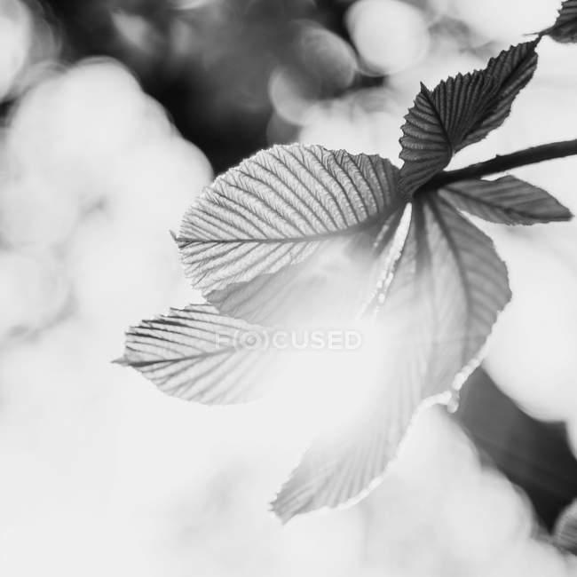 Die Blätter der Pflanze in der Sonne — Stockfoto
