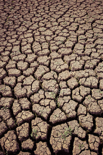 Close-up view of drought ground — Stock Photo