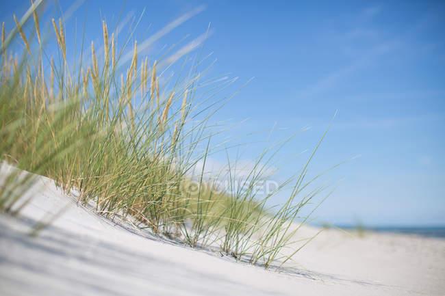 Costa de Sandy com grama do marram — Fotografia de Stock