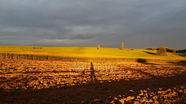 Campo del raccolto agricolo nel tramonto — Foto stock