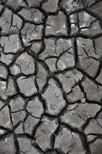 Climate change, cracked grey ground of desert — Stock Photo