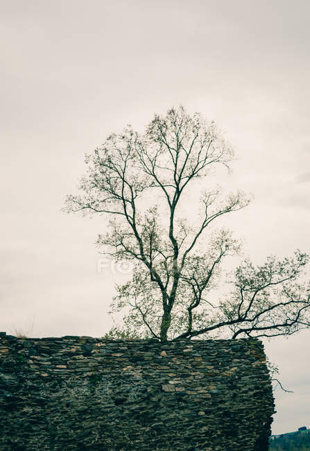Bare tree on ruins — Stock Photo