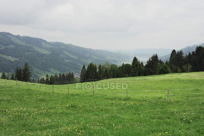 Prado de grama verde e montanhas com árvores — Fotografia de Stock