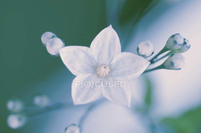 Крупным планом вид диких цветущих цветов — стоковое фото
