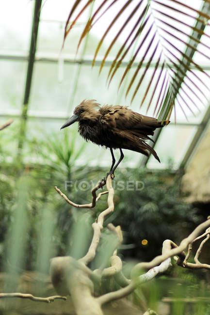 Просмотр коричневые птицы на ветке дерева в вольер зоопарка — стоковое фото