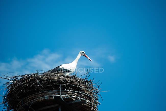 Stork standing in bird nest — Stock Photo