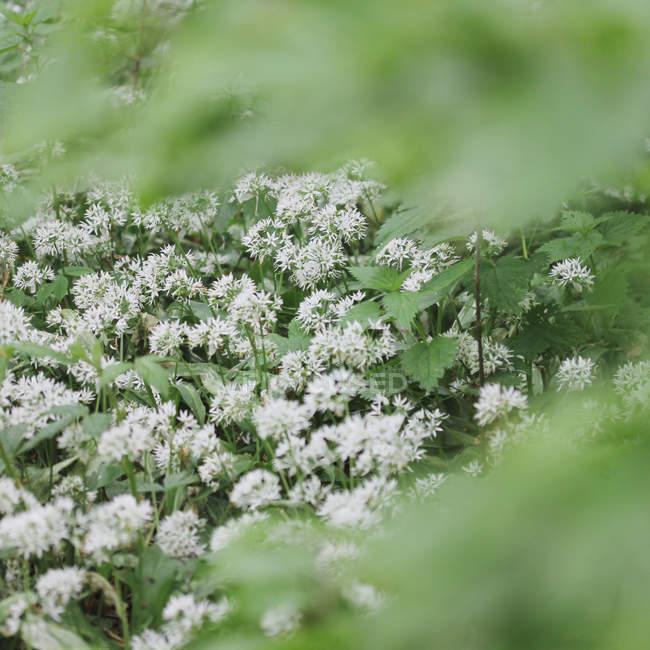 Цветущие растения с зелеными листьями — стоковое фото