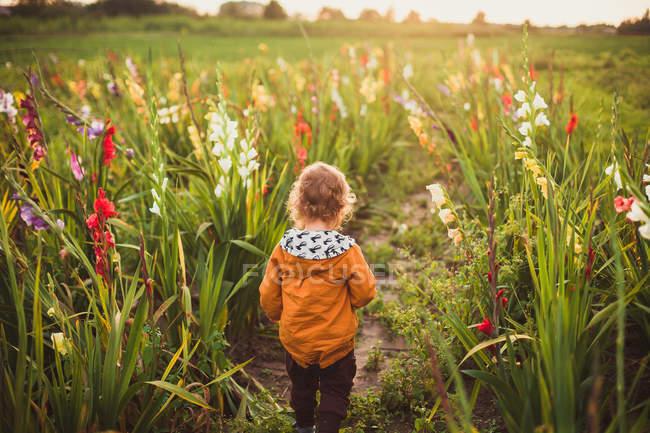 Bambino Che Cammina Nel Prato Di Campagna Di Mattina Con I Fiori Di