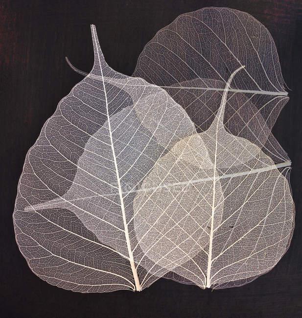 Planta de folhas rachises — Fotografia de Stock