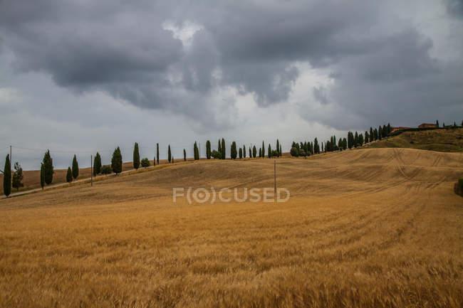 Toskana-Landschaft mit Feldern und Zypressen — Stockfoto