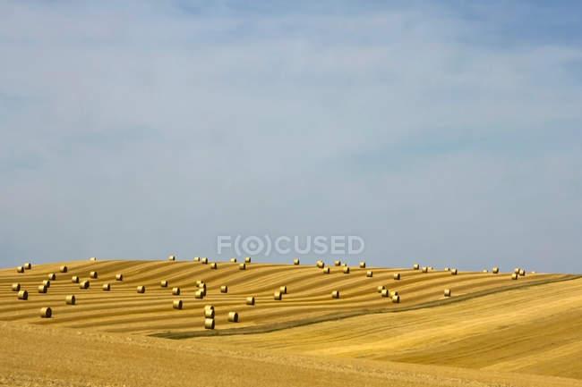 Balle di fieno sul campo agricolo — Foto stock