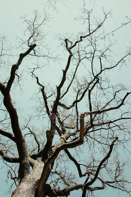 Fundo de exibição de árvore nua na luz solar — Fotografia de Stock