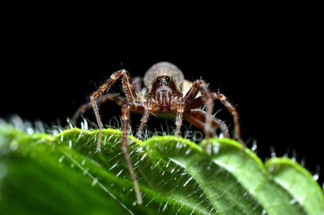 Aranha no habitat natural — Fotografia de Stock