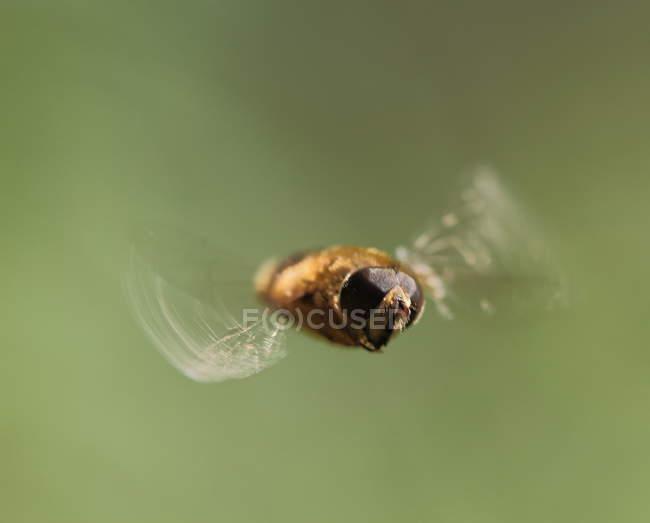Vista dell'insetto volante — Foto stock