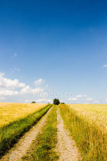 Nature landscape with road through yellow field view — Stock Photo