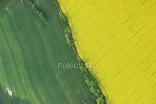 Campos verdes coloridos — Fotografia de Stock