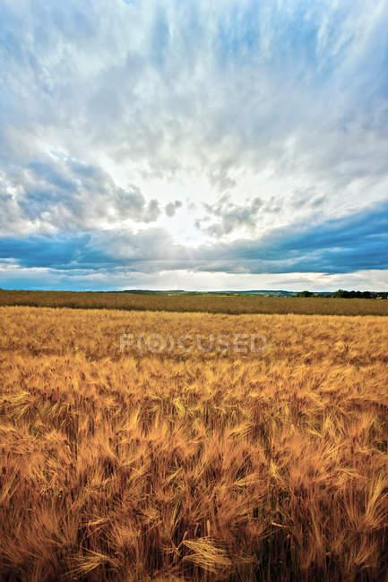 Campagna campo e cielo blu — Foto stock