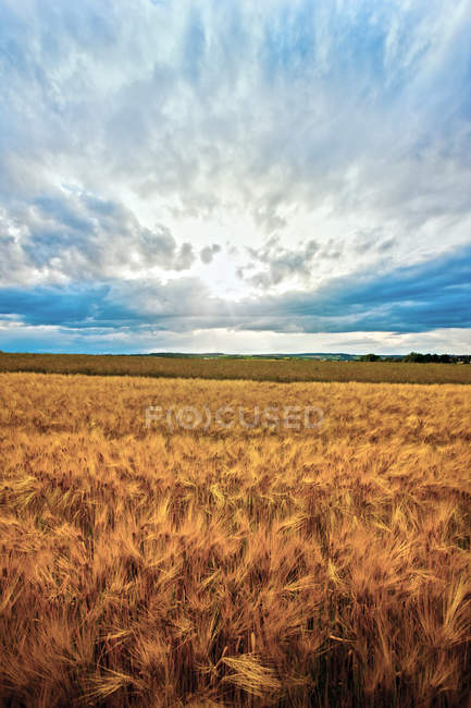 Countryside Field and blue sky — Stock Photo