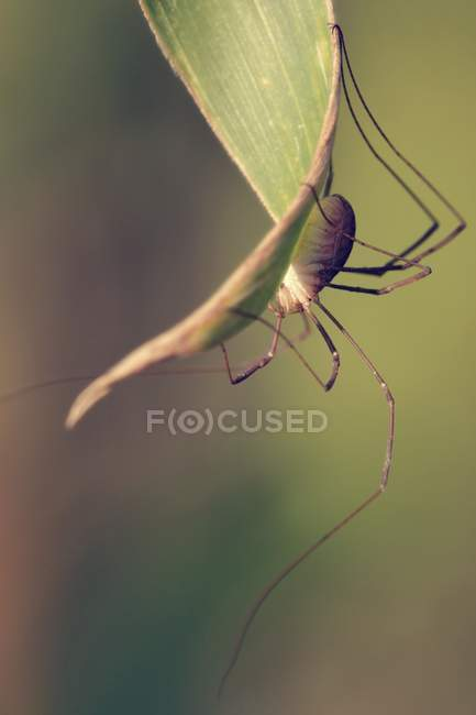 Spider in natural habitat — Stock Photo