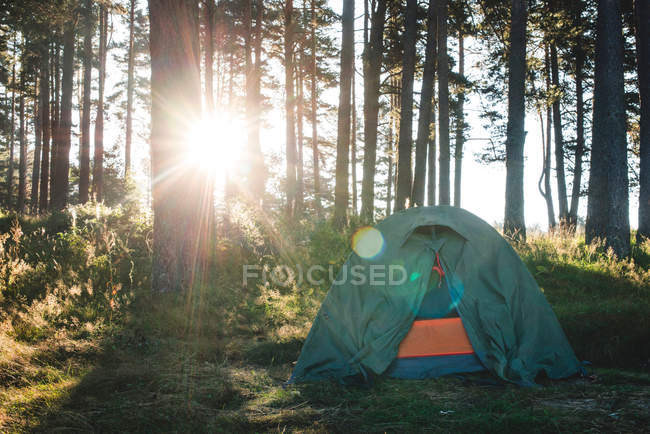 Tent in the forest on sunlight. — Stock Photo