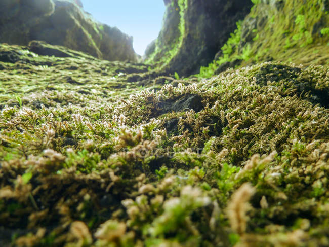 Rocks overgrown by green moss — Stock Photo