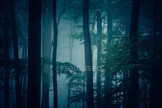 Туман в лесу на утро — стоковое фото