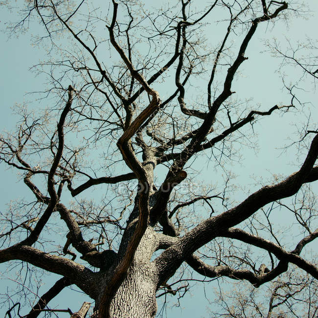 Bare tree branches against sky, bottom view — Stock Photo