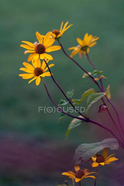 Fiori selvatici che sbocciano — Foto stock