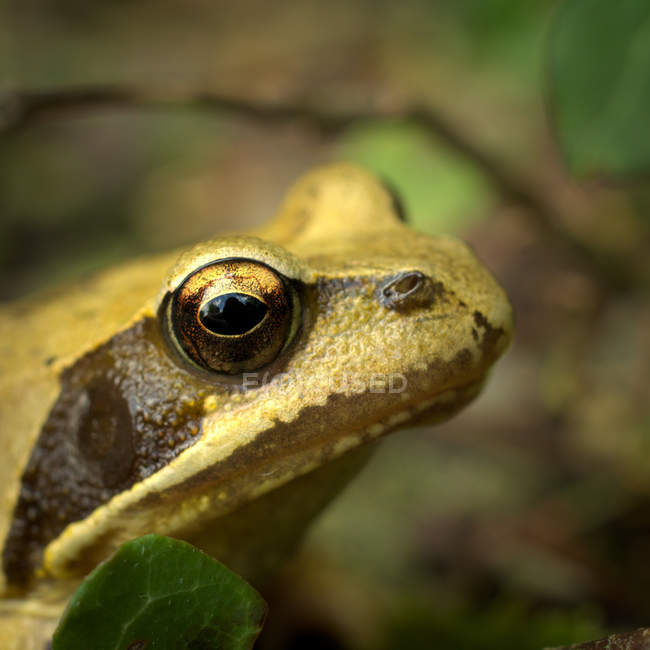 Frog in wild nature — Stock Photo