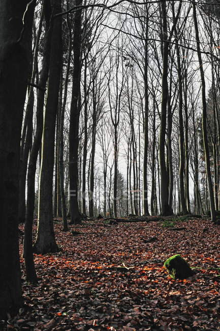 Folhas no chão debaixo de árvores — Fotografia de Stock
