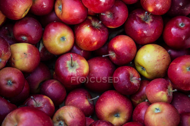 Red and yellow raw apples stack — Stock Photo