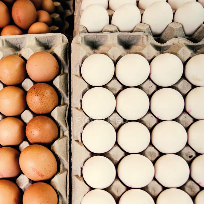 Белые и коричневые яйца в картонные поддоны — стоковое фото