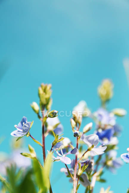 Wildflowers growing outdoor — Stock Photo
