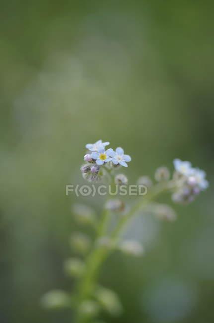 Цветут дикие цветы — стоковое фото