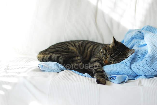 Кіт спати на синій ковдра — стокове фото