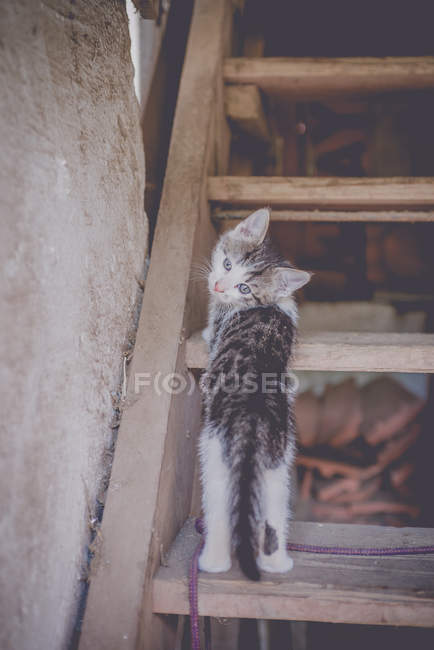 Cat standing on staircase and looking at camera — Stock Photo