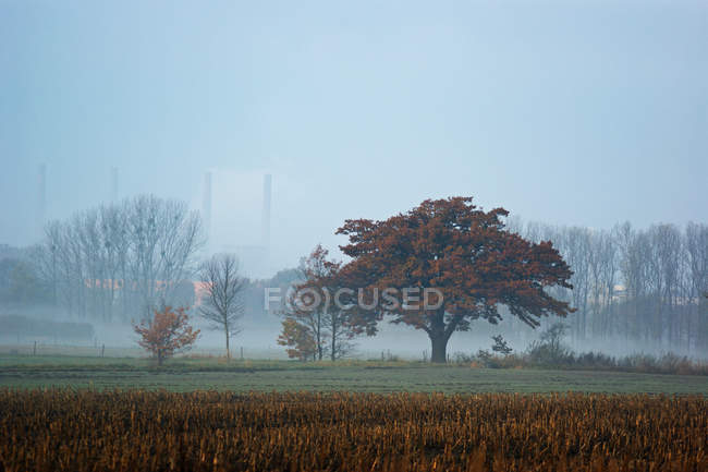 Nature landscape with scenic field view in foggy weather — Stock Photo