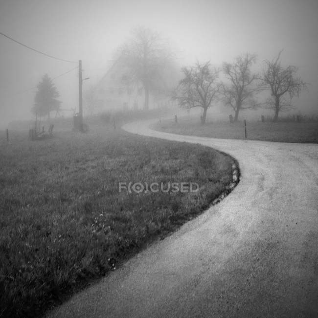Road through trees on field in foggy weather — Stock Photo