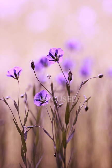 Цветущие цветы на лугу — стоковое фото
